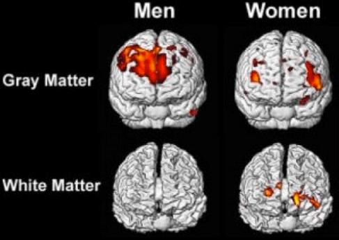 verschil mannen vrouwen hersenen