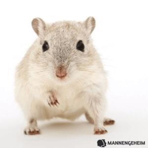 Een muis is een prooi in zijn spel vertellen dat je hem leuk vindt