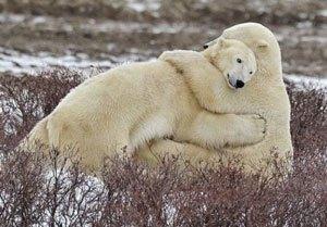 vrouwen-ijsberen-mannengeheim