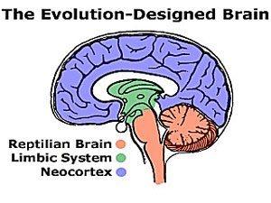 brein-evolutie-man
