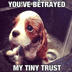 vertrouwen terugwinnen