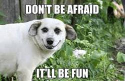 wees niet bang