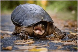 Help hem uit zijn schild te kruipen als bange schildpad