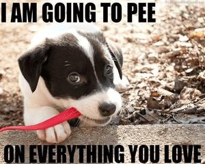 Hond trainen met de puppy methode zo train je hem