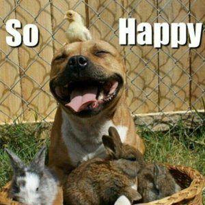 Wees geen blije puppy