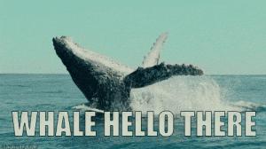 Whale Hello - Jezelf voorstellen