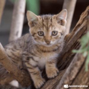 je kijkt de kat uit de boom