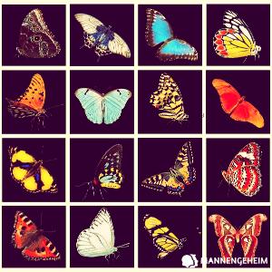 sociale vlinder